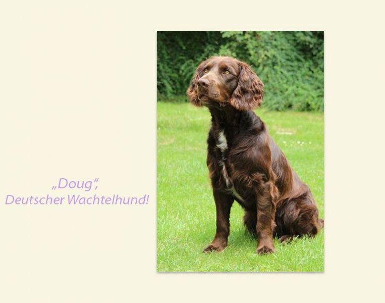 Doug-Wachtelhund