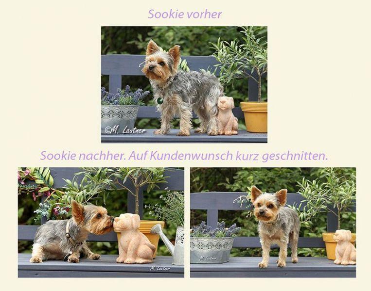 Sookie-vorher-nachher